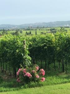 Weingut Masi Veneto
